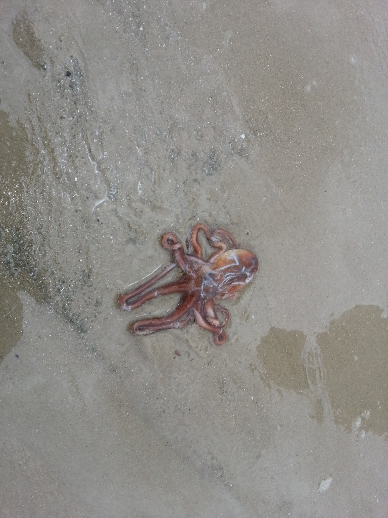 Hua Hin Octopus